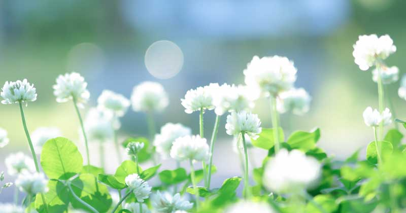 花あしらい~簡単フラワーアレンジメントの作り方