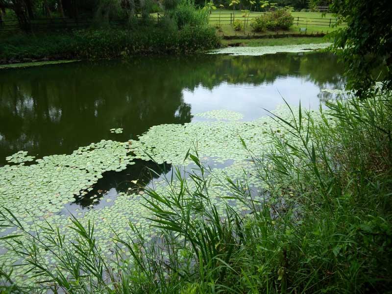 百華園の運河:浜名湖ガーデンパーク
