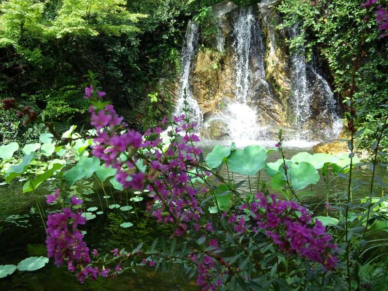 滝とミソハギ:浜名湖ガーデンパーク