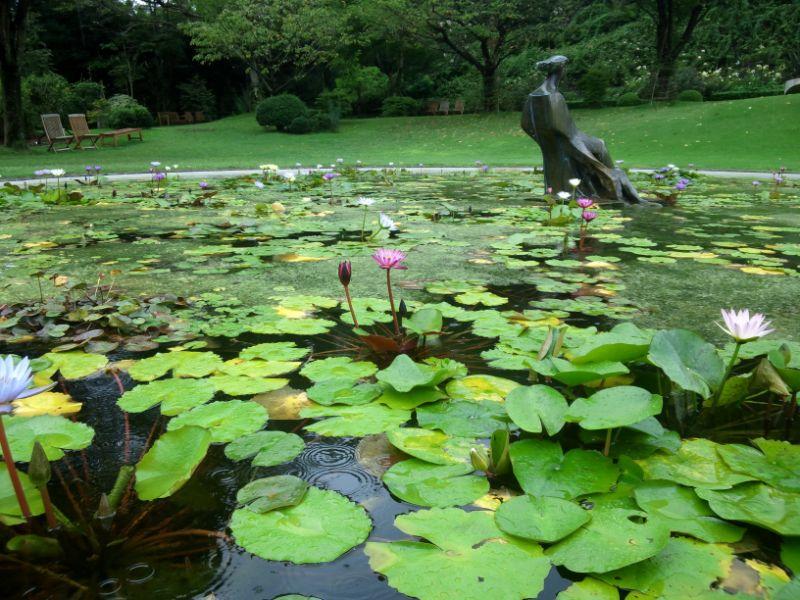 クレマチスの丘:睡蓮の池