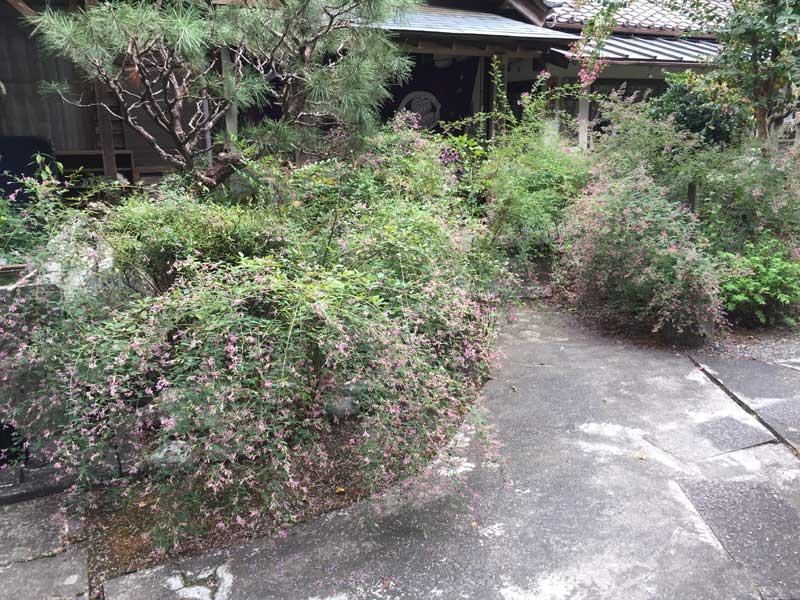 森町の萩のお寺