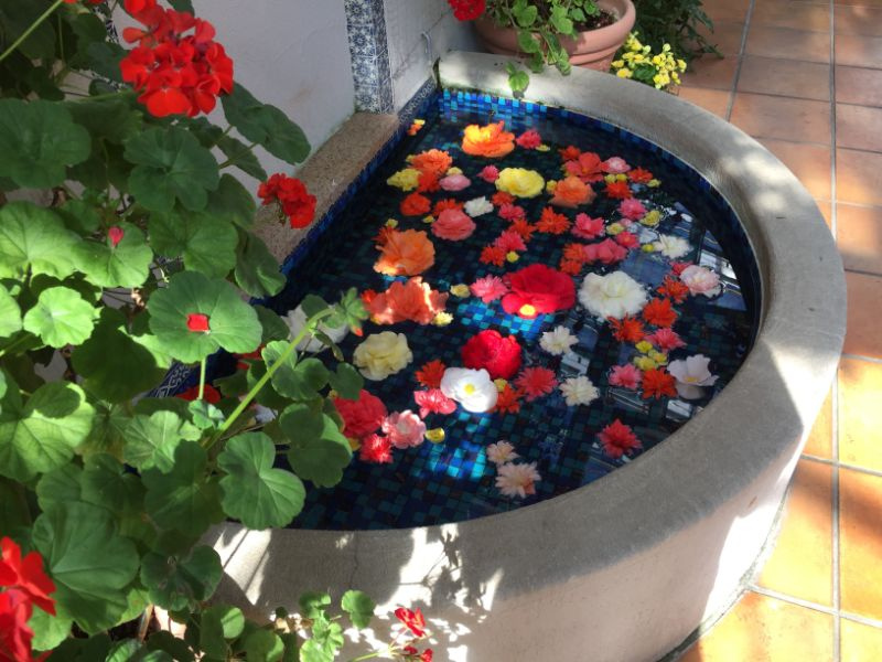 はままつフラワーパーク:水に浮かぶベゴニアの花