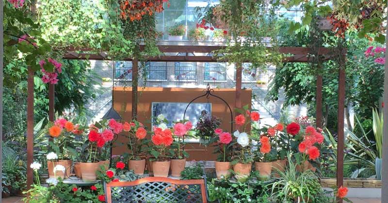 【浜松フラワーパーク】秋のバラ園と温室を花散歩♪2020-10月
