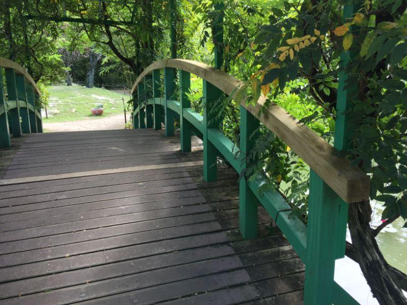 藤棚の下の太鼓橋