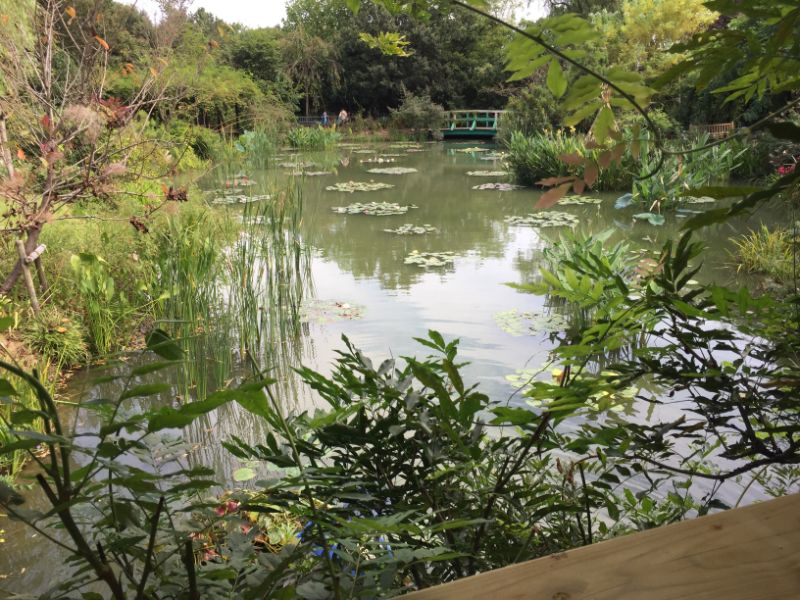 睡蓮の池が広がる水の庭