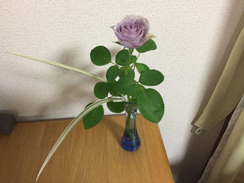紫のミニバラの一輪挿し、一週間後
