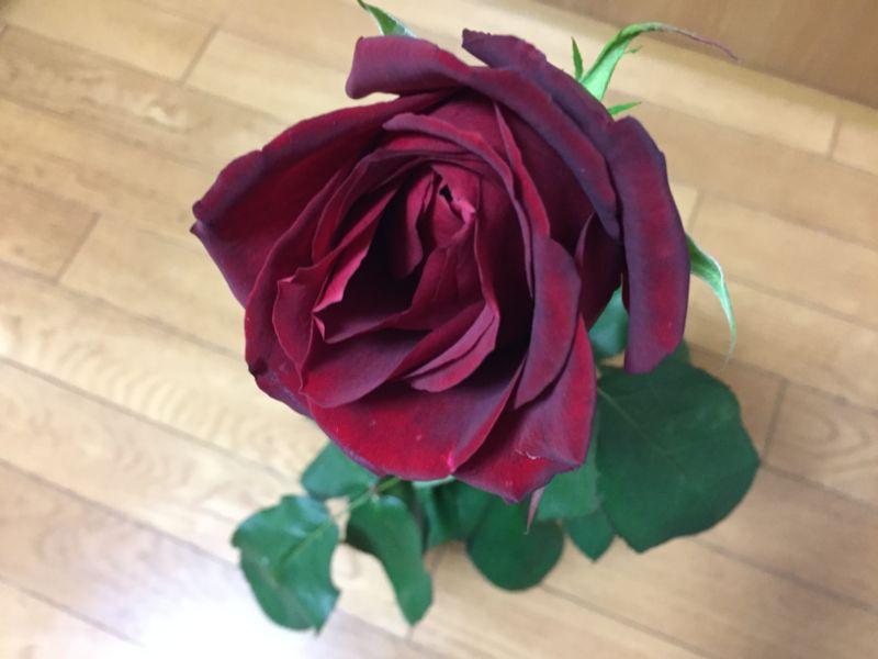 しおれてしまったバラの切り花