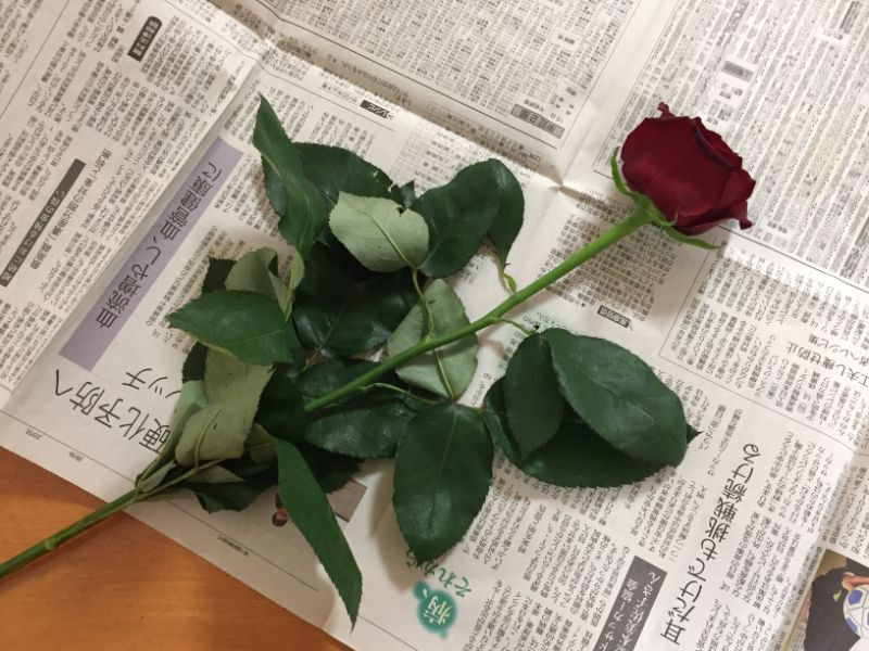 しおれたバラをもとに戻す方法
