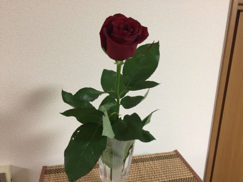 葉っぱも元通りになったバラの切り花