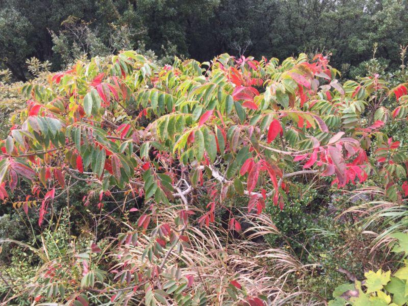 伊豆の国パノラマパーク:紅葉した木々