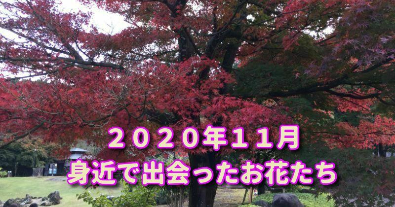 2020年11月の花、秋本番ながら温暖な静岡県で身近に出会った花たち(花散歩)