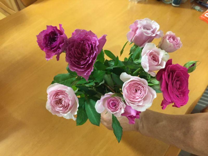 10本100円、激安のミニバラの切り花
