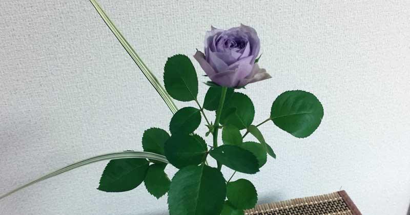 紫のミニバラの切り花にミスカンサスを添えて一輪挿し