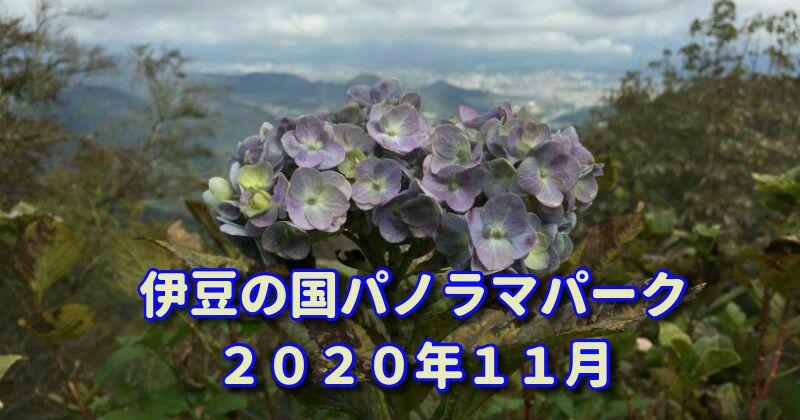 伊豆の国パノラマパーク:ロープウェイで登る山頂で出会った花たち(2020年11月の花散歩)