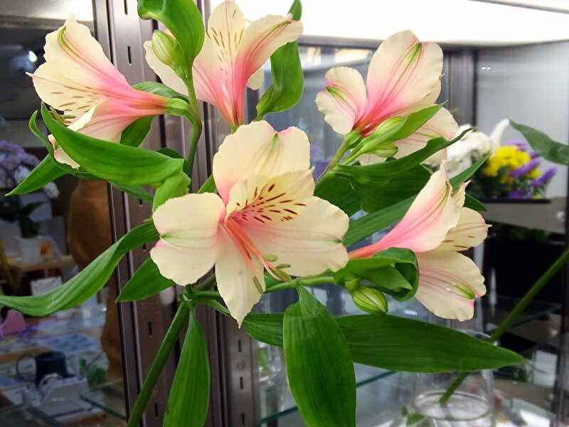 アルストロメリアの切り花