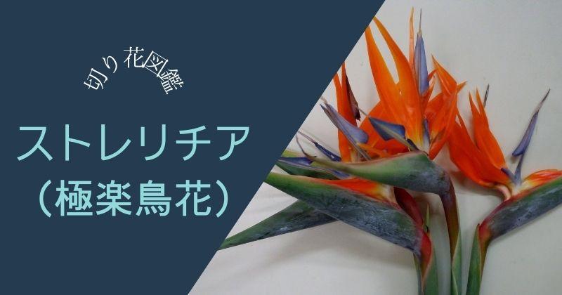 ストレリチア(極楽鳥花)の切り花