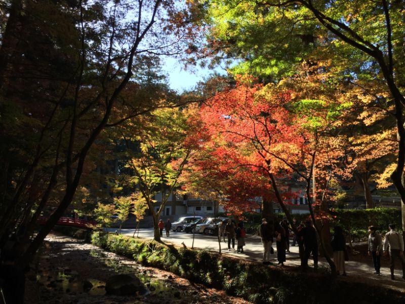 紅葉の小国神社