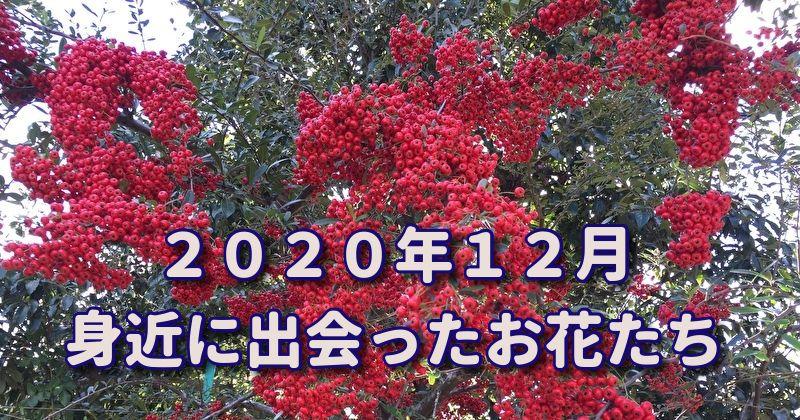 2020年12月の冬の花
