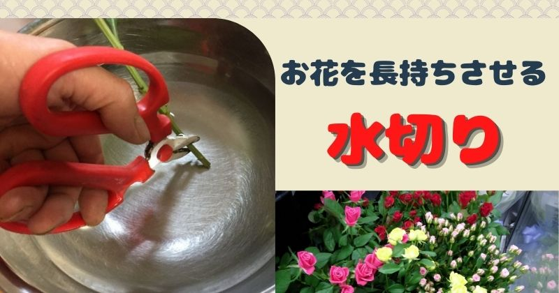 水切りしてますか?切り花を長持ちさせる水揚げの基本