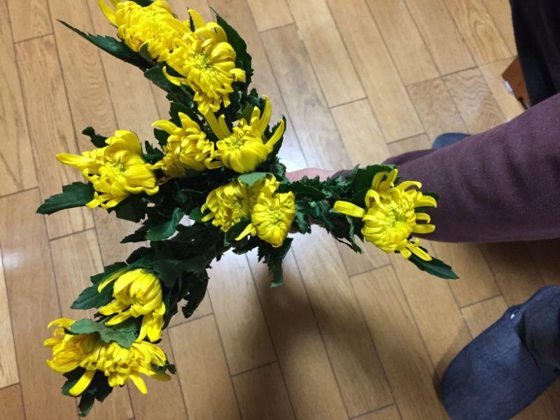 しおれてしまった菊の花