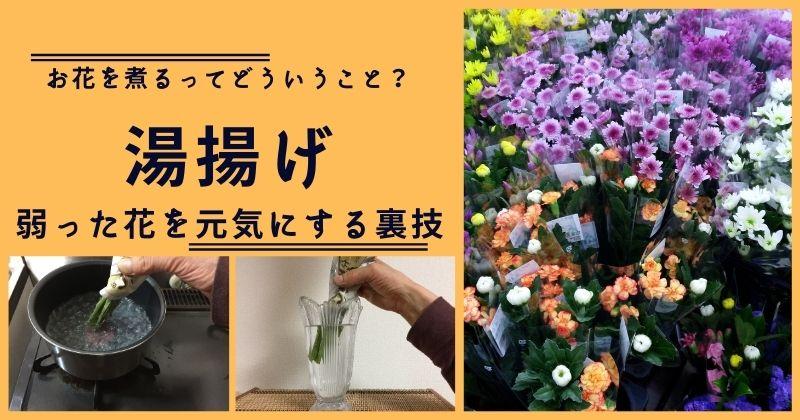 【湯揚げ】弱った切り花を元気にする水揚げの裏技