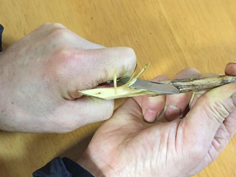 枝物の水揚げ:表皮を剥く