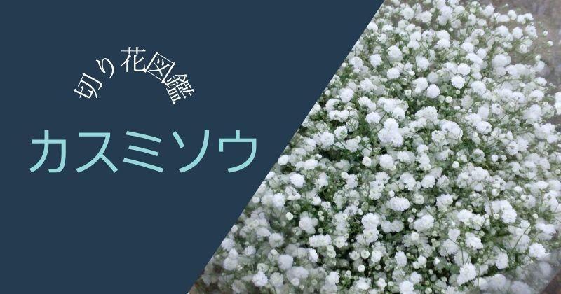 カスミソウの切り花:花束やアレンジの名脇役。臭いのが難点。匂いの原因と対策はあるの?