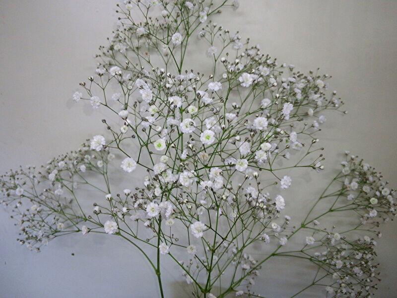 カスミソウの切り花:飾り方や日持ちは?