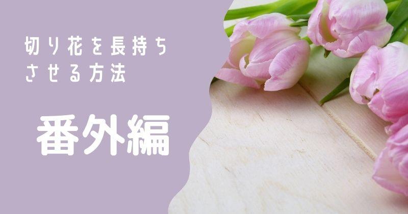 切り花を長持ちさせる方法:番外編