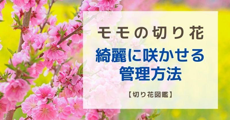 桃の切り花が咲かない?綺麗に咲かせ方や長持ちさせる管理方法