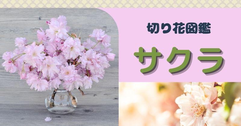 桜の切り花:種類や出回る時期は?
