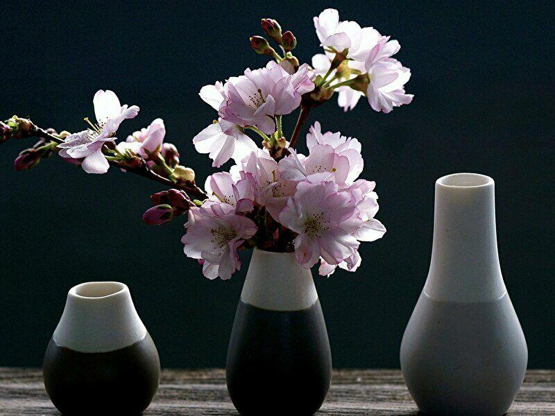 サクラの切花の飾り方