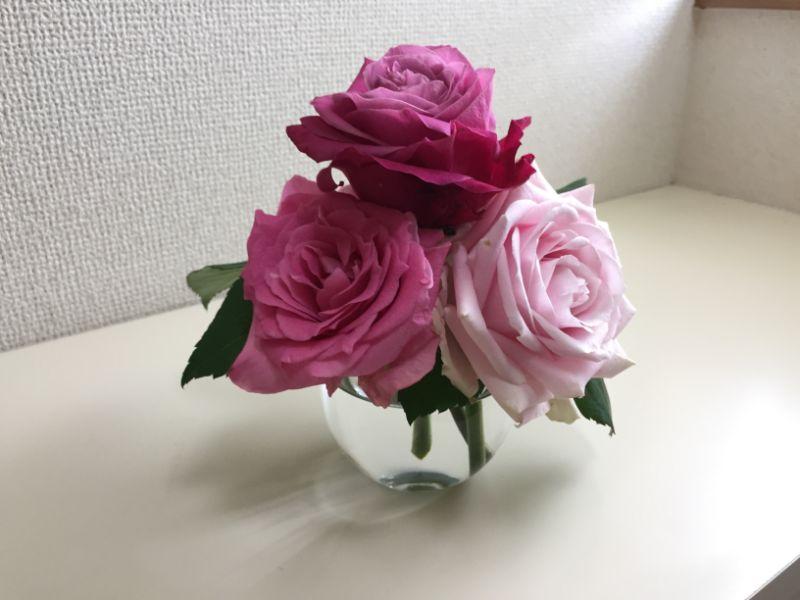 100均のガラスコップと産直のバラで一輪挿し