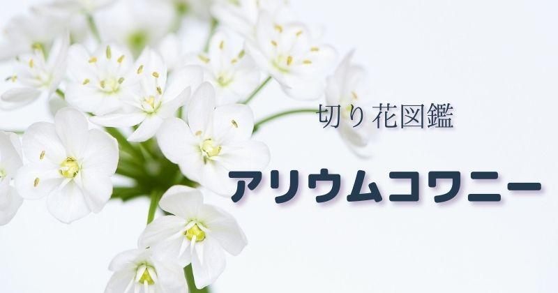 アリウムコワニーの切り花・日持ち・管理・飾り方