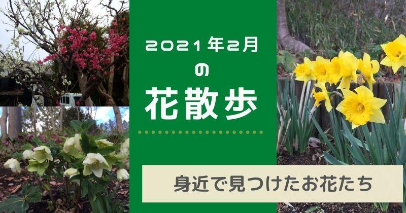 2021年2月の花散歩