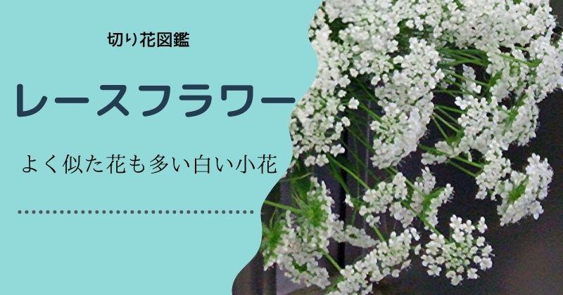 レースフラワーの切り花:よく似た花も多い白い小花