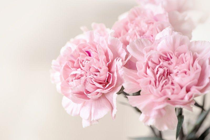 お花屋さんで母の日の花を買わないほうがいい!