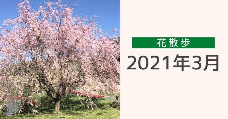 2021年3月の花散歩