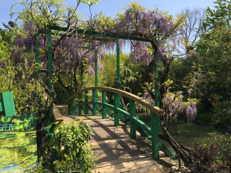 浜名湖ガーデンパークのモネの庭にある藤の花