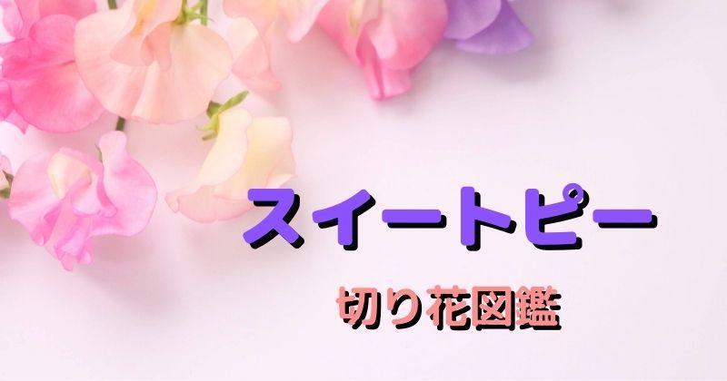 スイートピーの切り花