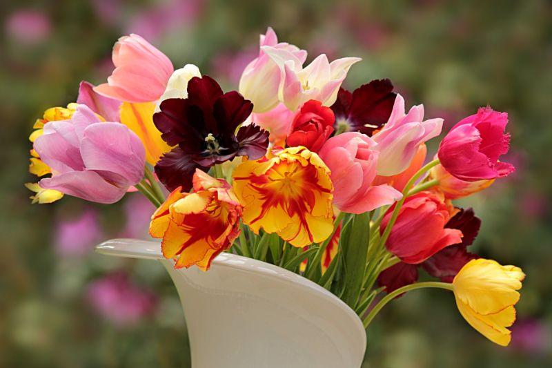 チューリップの切り花の特徴、飾り方