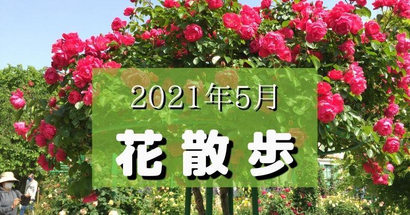2021年5月の花散歩